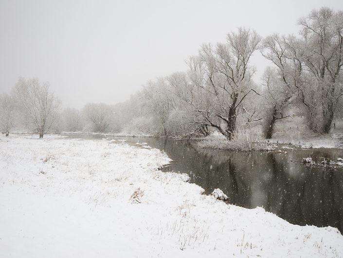 Rheinauen im Winter 2015