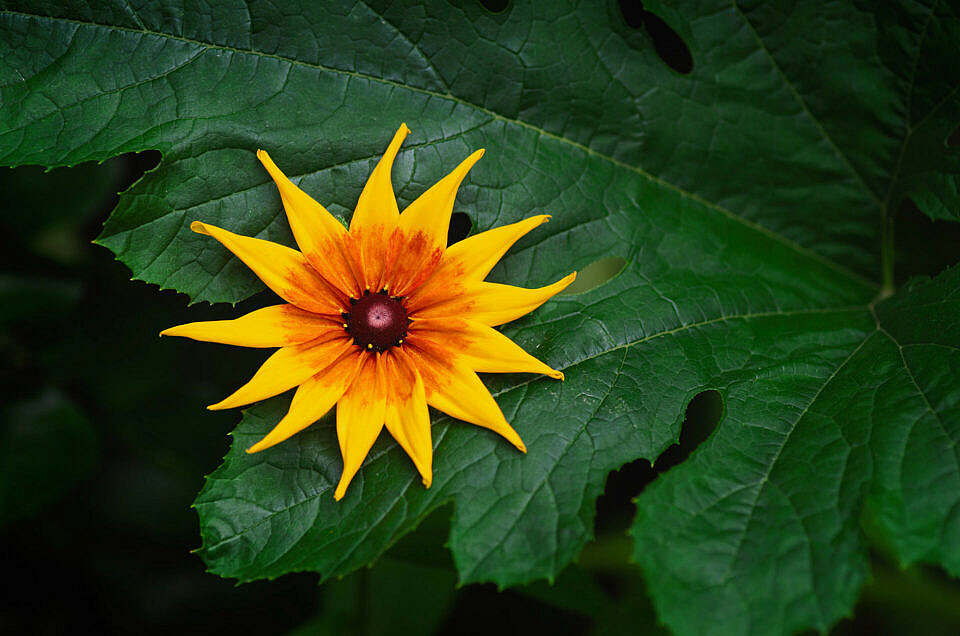 """New Gallery            """"Sunflower Project 2020/21"""""""